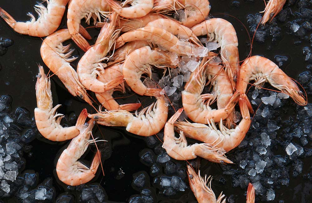 Valentines Day guide to seafood aphrodisiacs - Prawns