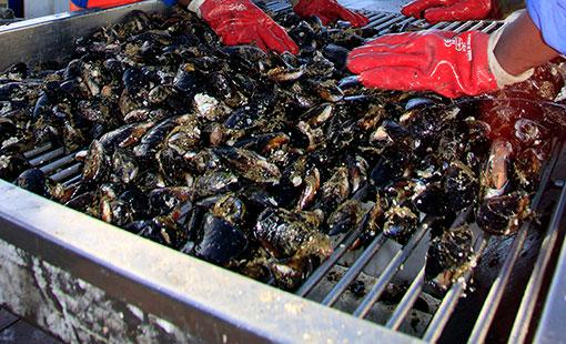 Mussel Aquaculture